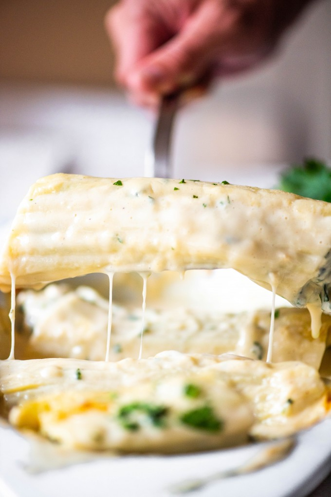 chicken and spinach manicotti with copycat olive garden alfredo